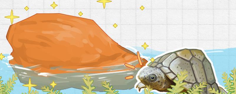 剃刀龟可以浅水养吗,水位多高合适