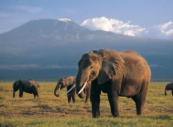 云南大象北迁遇到高速公路怎么办?云南野象群为什么不直接抓起来拖回去