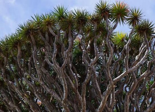 世界十大最奇特的植物,百岁兰是雌雄异株、大王花拥有恶臭气味