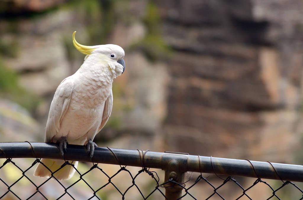鹦鹉晚上放阳台会冷吗