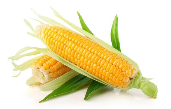 冬季养生必吃十种食物,冬天适合吃什么养生食物