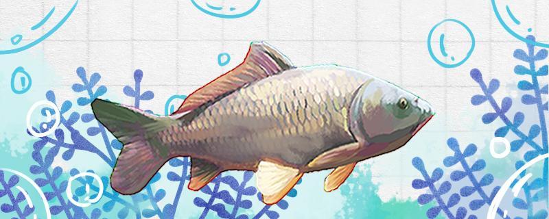 水库钓鲤鱼钓底还是钓浮,用什么饵料