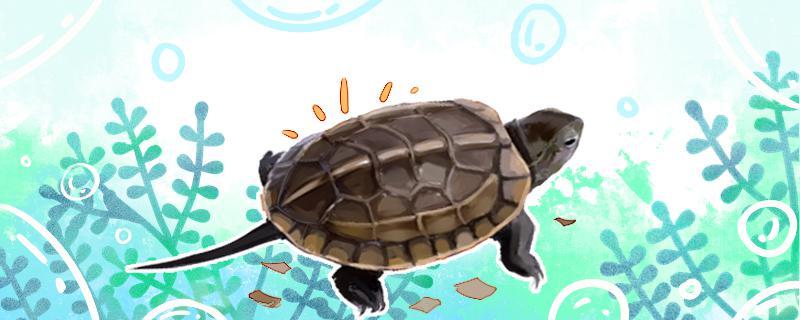 草龟水质要求,水深的要求