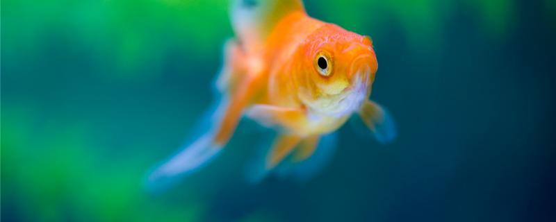 金鱼晚上怕黑吗,晚上会睡觉吗