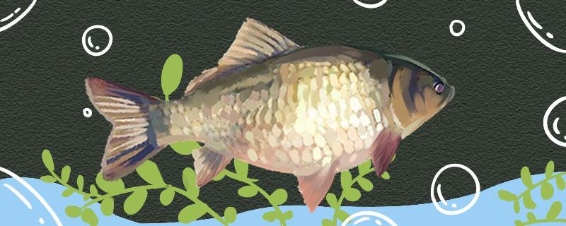 水库可以钓鱼吗,如何钓鲫鱼