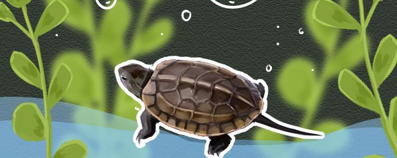 草龟水肿是什么原因,怎么治疗