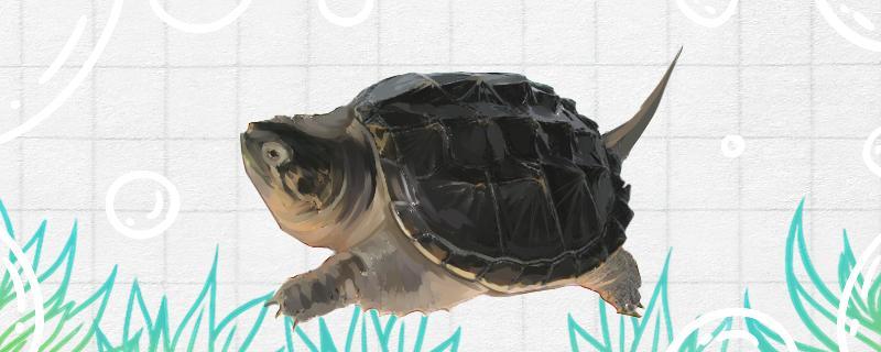 鳄龟会脱壳吗,如何区别脱壳和腐皮