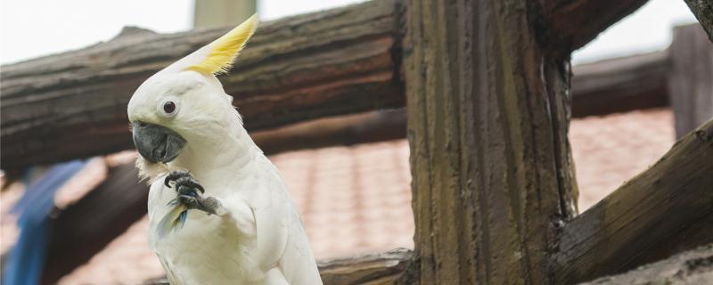 鹦鹉有几种