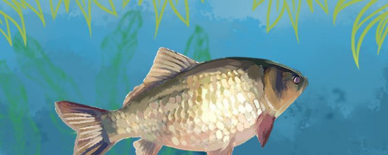 水库怎样能快速钓到大点的鲫鱼,怎样选择钓位