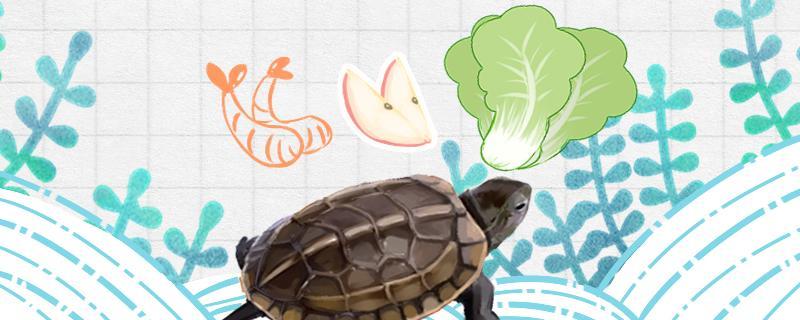 草龟吃什么蔬菜,怎么处理喂草龟的蔬菜