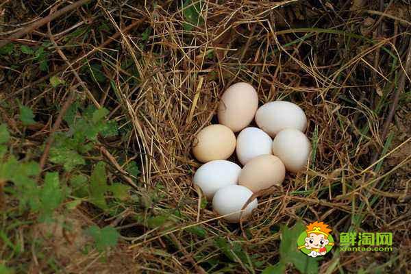 鸡蛋怎么放保存时间长,鸡蛋保存需要注意什么