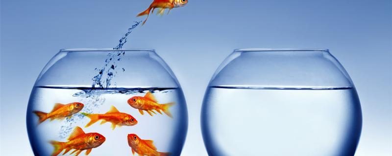 买金鱼怎么挑选,刚买回家的金鱼怎么养
