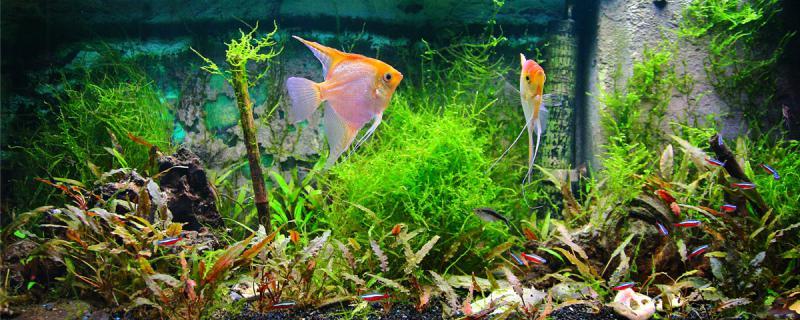 鱼缸水总是白蒙蒙的怎么办,为什么水会白蒙蒙的
