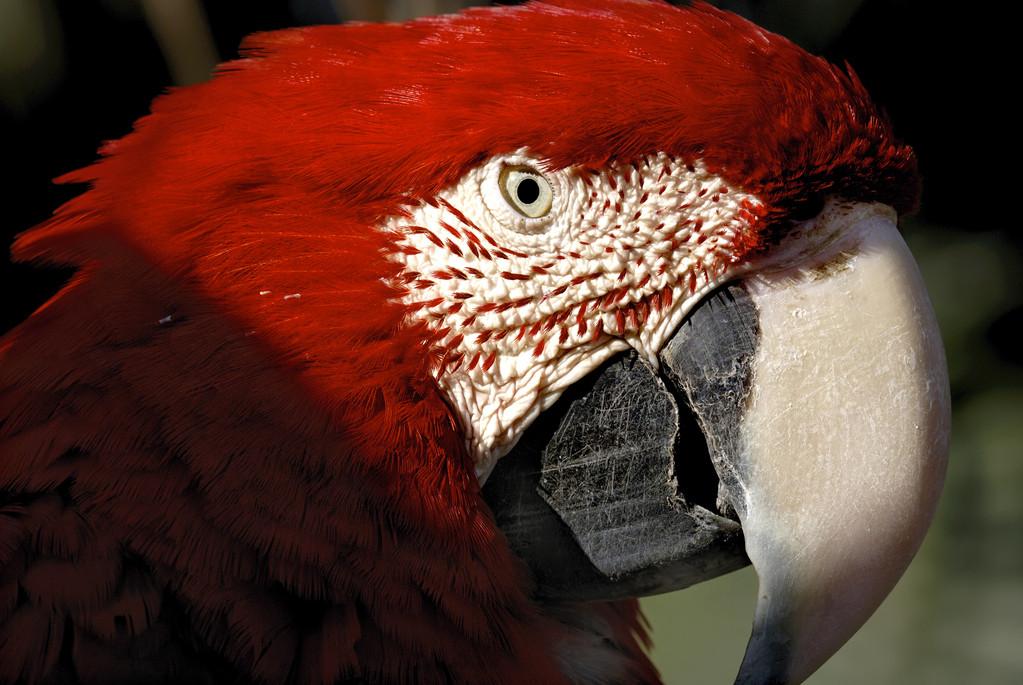 鹦鹉身上痒痒总是啄毛怎么办