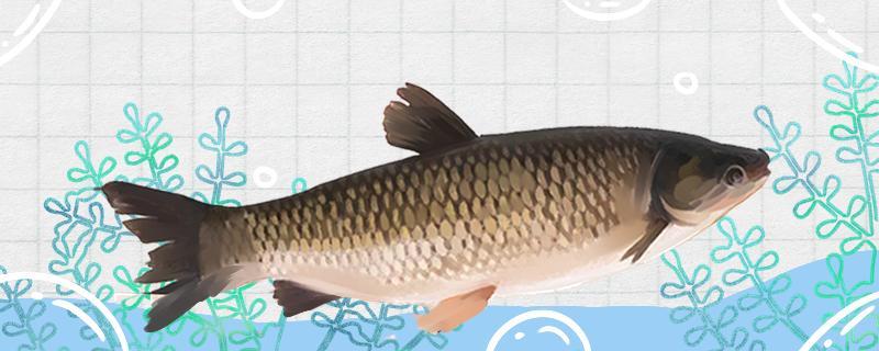 水库钓草鱼钓底还是钓浮,用什么饵料