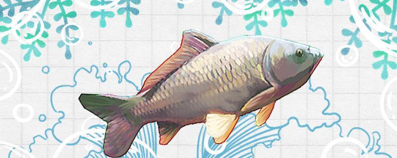 水库钓鲤鱼怎么选钓位,用什么打窝料最好