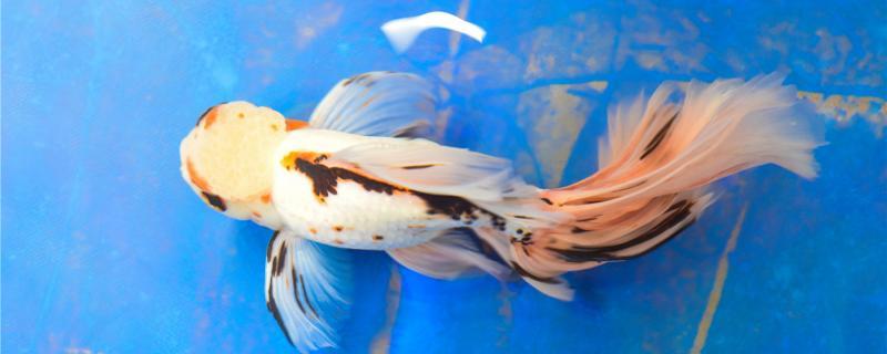 养金鱼水多久换一次,换什么水好
