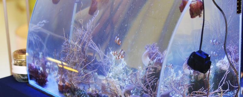 瓷缸养鱼过滤器选什么样的?过滤有什么用
