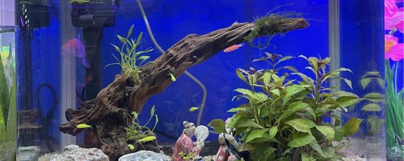 有水草的鱼缸怎么清理鱼屎,有什么方法减少鱼屎