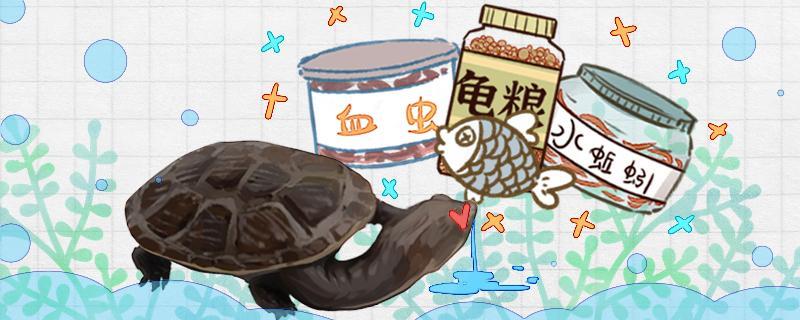 蛇颈龟吃什么食物,多长时间喂一次