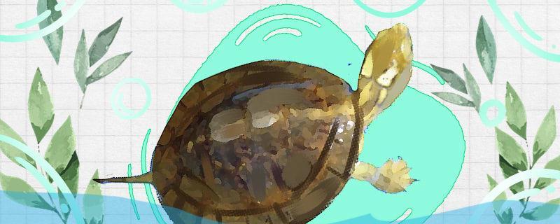 眼斑龟和四眼龟的区别,能一起养吗