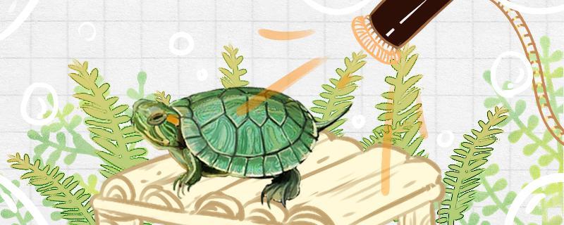 巴西龟不能放生吗,能食用吗