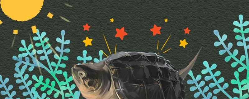 鳄龟晒太阳好还是不晒太阳好,晒多长时间合适