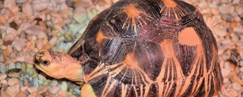 乌龟吃什么龟粮,如何给乌龟喂食