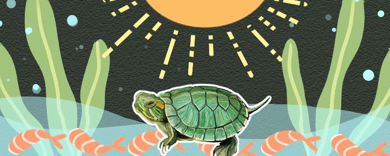 巴西龟怕太阳晒吗,晒太阳要注意什么