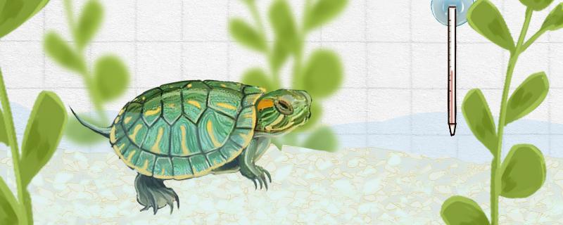 巴西龟不睁眼是什么原因,怎么办