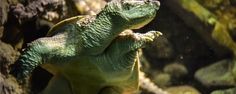 乌龟一般在什么时候脱壳,脱壳时要注意什么