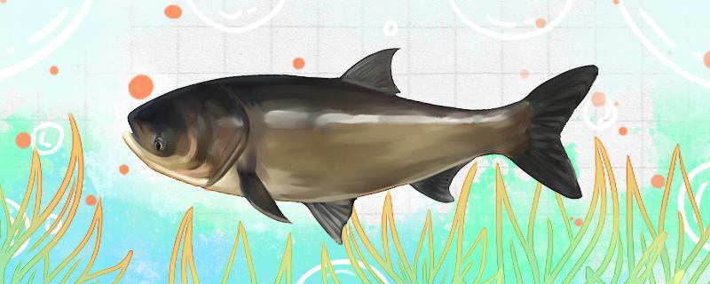 海竿能钓鲢鳙吗,怎么调漂教学
