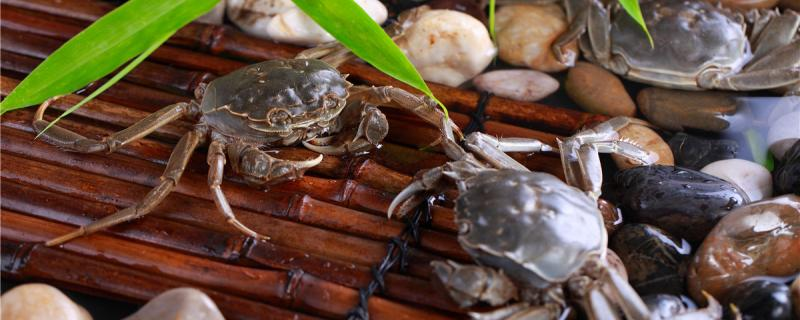 地笼抓螃蟹效果好吗,放什么诱饵