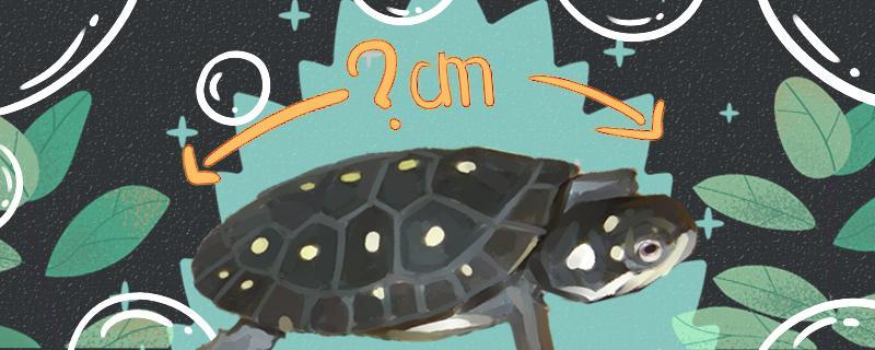 星点水龟怎么养,养星点水龟要注意什么