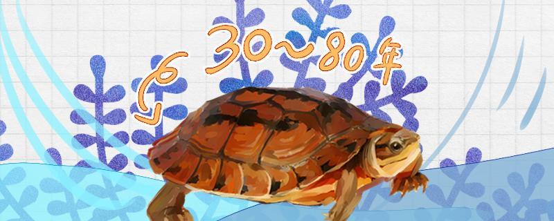 什么是半水龟,哪些半水龟好养