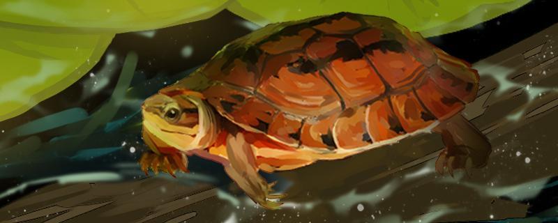 三线闭壳龟是保护动物吗,哪些闭壳龟可以养
