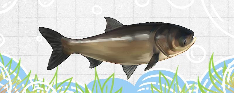 温度低钓鲢鳙多深最好,用什么味型的饵