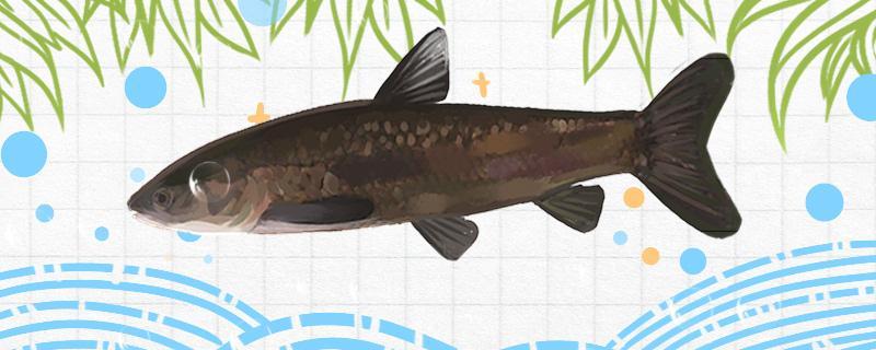 秋季能钓青鱼吗,怎样钓