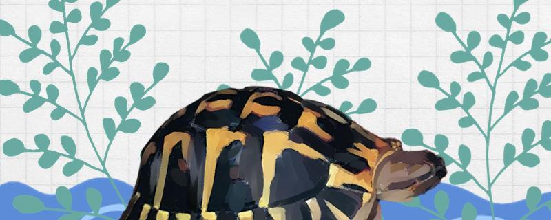 在中国北方适合养的陆龟,陆龟和水龟有什么区别