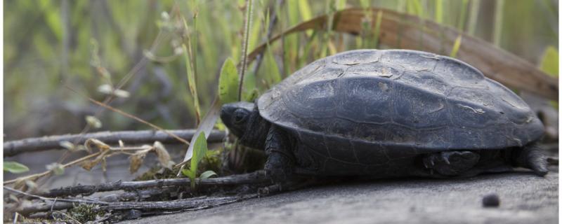 幼龟需要晒背吗,晒背有什么用
