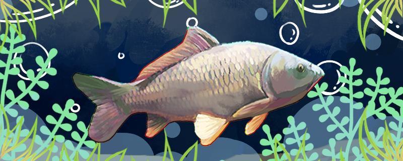 秋天夜钓鲤鱼钓深还是浅,用多长的鱼竿