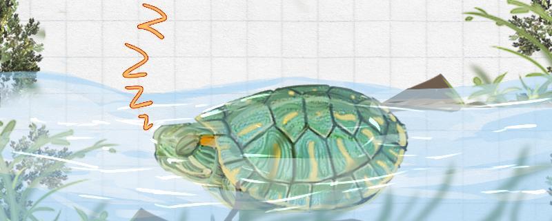 巴西红耳龟喜欢水吗,对水有什么要求