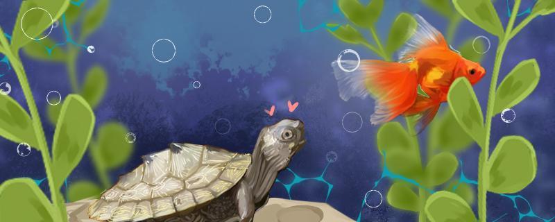地图乌龟可以和什么一起养,养地图乌龟要注意什么