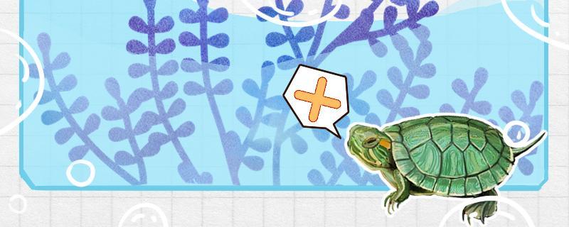 巴西红耳龟怎么看年龄,怎么养巴西龟活得久