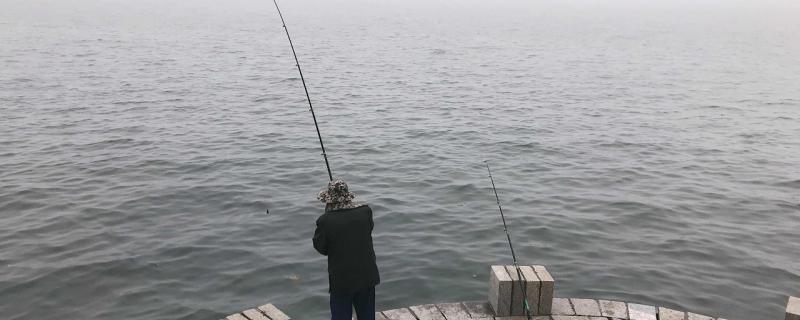 海钓用鸡肝行吗,能钓什么鱼
