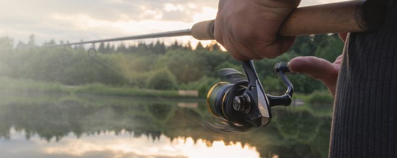 猪肝和鸡肝能钓鱼吗,哪个钓鱼好