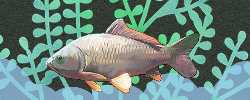 钓10斤左右的鲤鱼用几号大线,用几号钩