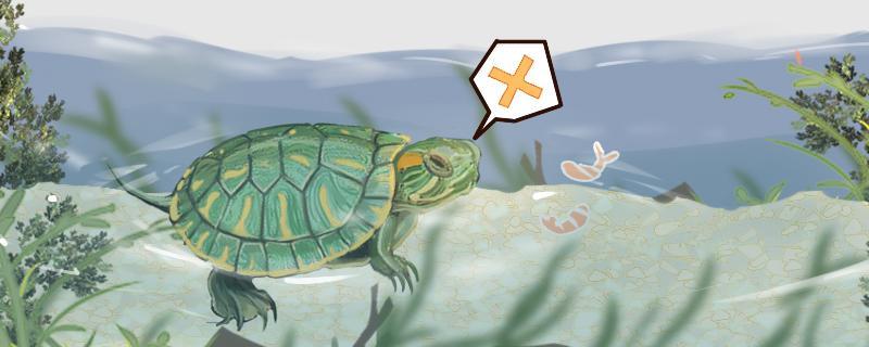 新手如何养小巴西龟,小巴西龟怎么养