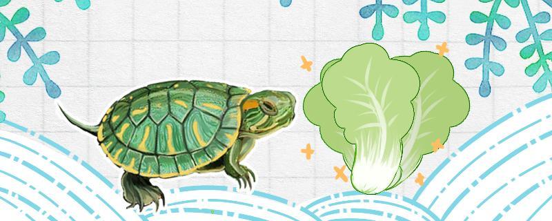 巴西龟为什么不吃食,巴西龟吃什么