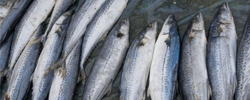 路亚鲅鱼用什么拟饵,用什么线